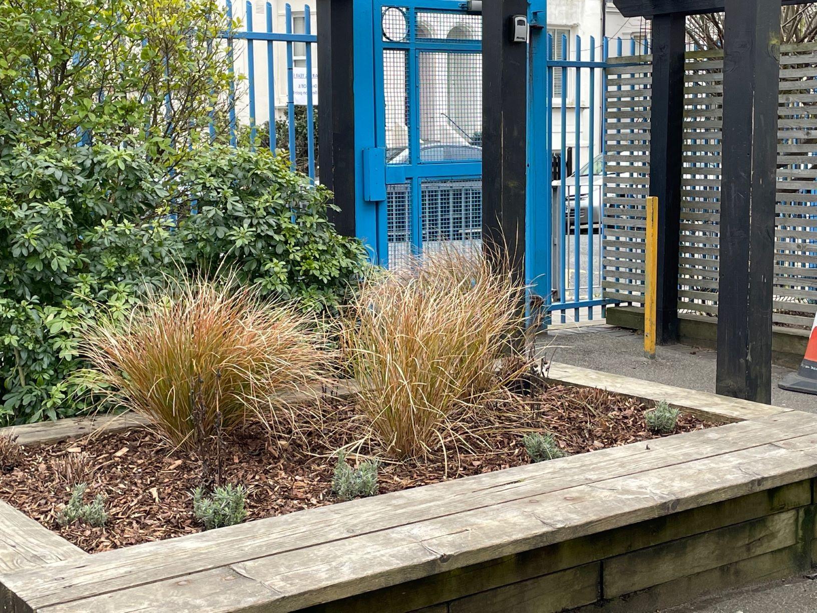 Planting More Healthy Air in Schools